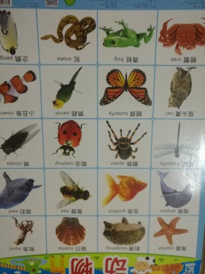 海润阳光·幼儿学前教育单面挂图(套装共32张) 晒单图