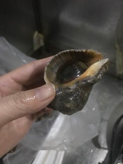 鲜玛特 野生海螺鲜活500g约10只大连獐子岛大海螺海鲜水产 晒单图