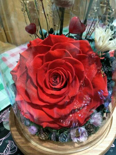 DILOVE蒂爱  进口永生花礼盒玻璃罩玫瑰花鲜花速递送女朋友老婆情人节母亲节520礼物 爱如心火(灯光电池款) 晒单图