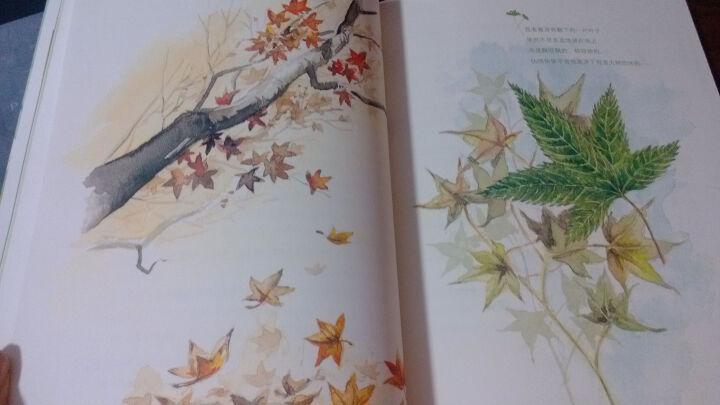 苦苓的魔法森林(套装共2册)(内赠植物生长记录表) 晒单图