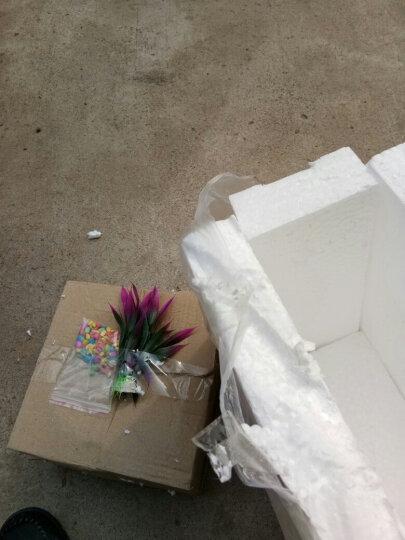 [买一送四]圆形鱼缸透明玻璃办公桌鼓缸形玻璃金鱼缸乌龟缸创意迷你小型造景水培花瓶 15D送彩石+定制篮 晒单图