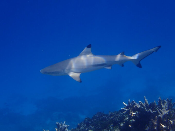 奥林巴斯(OLYMPUS)TG-5 抗震防水运动相机数码 TG5微距潜水照相机 户外旅游 4K视频摄像机 高清自拍 红色 晒单图