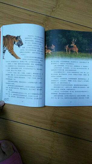 影像青少版:中国虎 晒单图