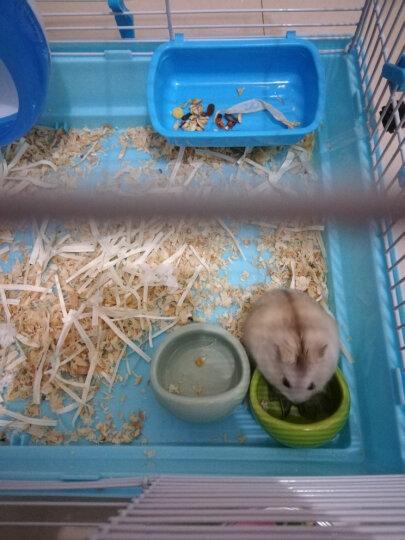 洁西仓鼠金丝熊食盆 松鼠陶瓷食物碗小碗 饲料盒 仓鼠用品 买二送一 洁西扇形小食盆 晒单图
