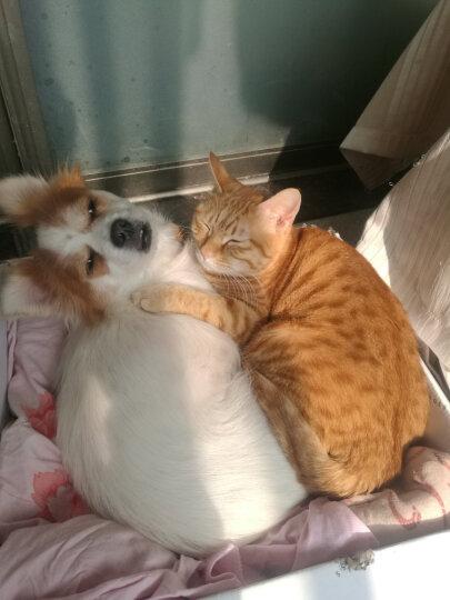 耐威克 猫粮 理想体态猫粮 成猫 5kg 晒单图
