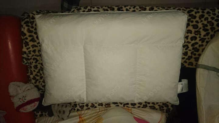 COCO-MAT纯天然乳胶枕头成人护颈枕颈椎枕枕芯非泰国进口睡眠枕希腊品牌正品 护颈椎6段设计Sithon Teen 60/40/10/12cm 晒单图