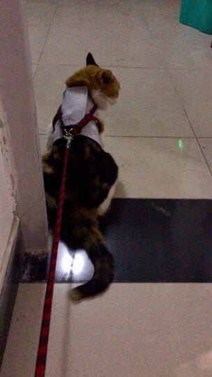 华元宠具(hoopet)猫绳子猫牵引 溜猫绳猫牵引绳套装胸背带S 晒单图