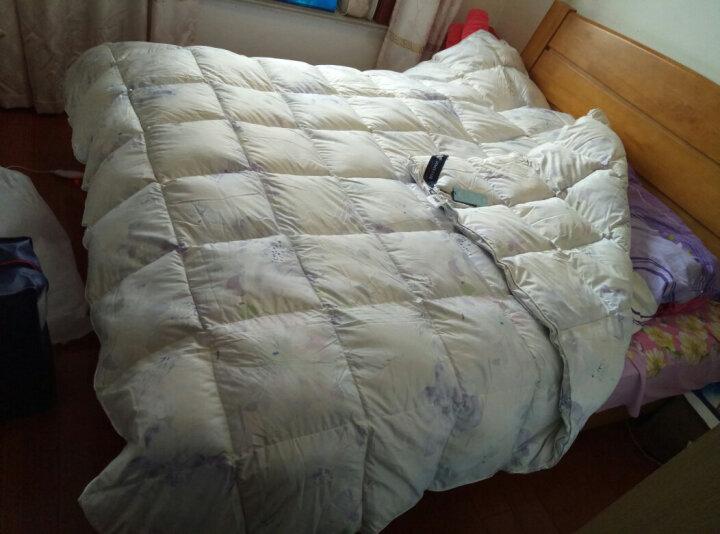 安睡宝(somerelle)  被芯 90%鹅绒被子 羽绒被 洛狄鹅绒春秋被 1.5米床 200*230cm 晒单图