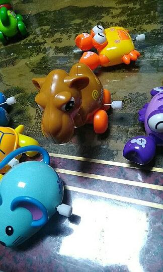 儿童玩具男女小孩婴幼儿宝宝玩具上发条小动物早教启蒙益智玩具1-3-6岁礼物 炫彩QQ龟(颜色随机一个) 晒单图