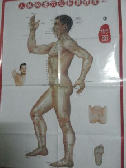 人体经络穴位标准挂图(男性)(3张) 晒单图