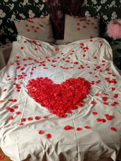 梦桥 B&D 结婚玫瑰花瓣婚礼用品仿真玫瑰花瓣花撒花婚房婚床装饰布置2000片花瓣 晒单图
