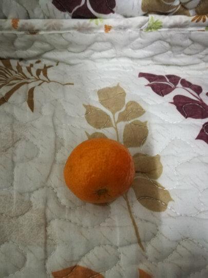 盈五福 四会砂糖橘沙糖桔小蜜桔 新鲜水果 1.25kg  晒单图