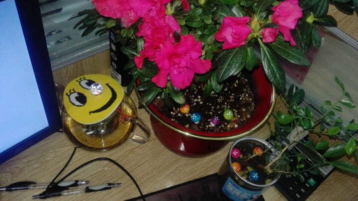 哆啦园艺 多肉植物花盆 陶瓷花盆 肉肉花器 十二星座夜光杯 复古创意 粗陶花盆 肉肉植物盆 多肉饰品小蘑菇一个 晒单图