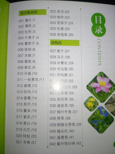 全新正版 450种中草药彩色图鉴  医学类精选书籍 中草药知识大全 常见病症选药指南 中草 晒单图
