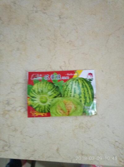 颜集卉 D蔬菜瓜果种子 家庭园艺庭院 花密脆95粒 晒单图
