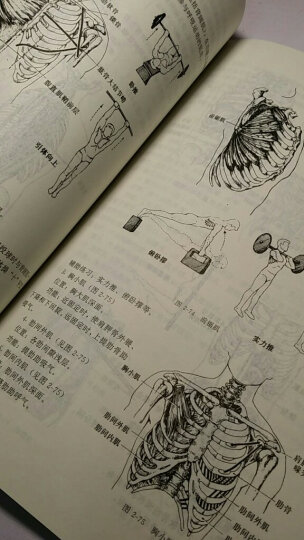 体育运动学校教材:人体解剖学 晒单图
