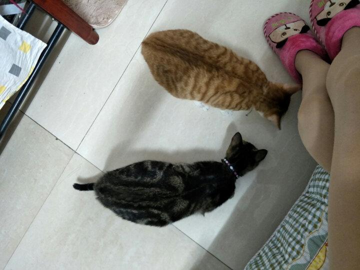 伟嘉 宠物成猫猫粮 干湿搭配套装(300g吞拿鱼10包+金枪鱼妙鲜包12袋+海洋鱼妙鲜包12袋) 晒单图