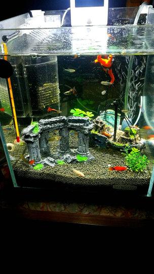 森森 (SUNSUN)森森迷你小金鱼缸小型水族箱超白玻璃桌面生态水草缸热带鱼乌龟缸 晒单图