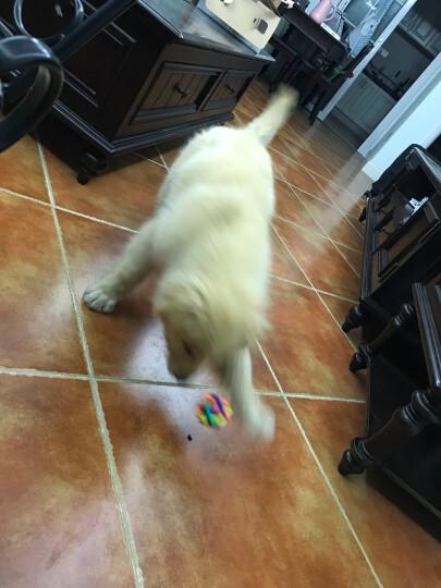 咪贝萌 宠物狗狗玩具 磨牙用品套餐 橡胶七彩铃铛球 训导啃咬球 毛绳绳结 发声汉堡各一个 组合 四种各一个 晒单图