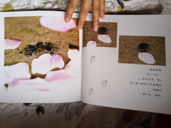 耕林童书馆:亲亲自然(套装11册) 晒单图
