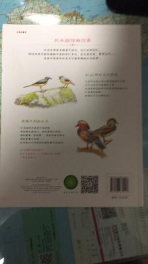 水边的自然课 可爱的水鸟朋友 晒单图