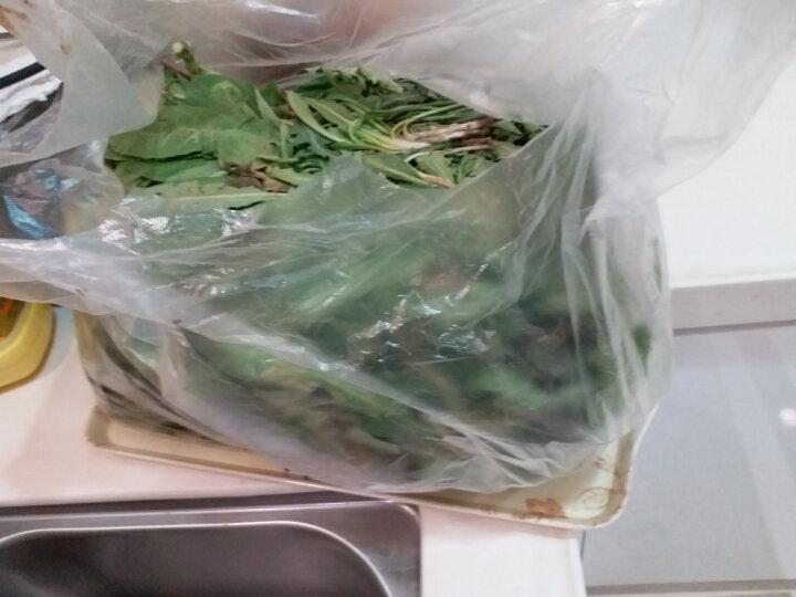 现挖山野野菜 新鲜野生蒲公英婆婆丁地黄丁 苦菜蔬菜 1.5kg 晒单图