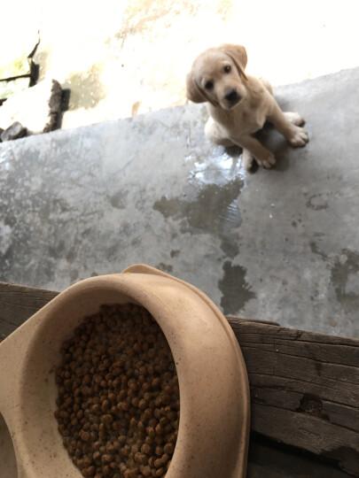 肉酱奶糕 离乳期幼犬狗粮 孕犬 哺乳期母犬 泰迪贵宾萨摩耶幼犬粮 奶糕通用犬粮3斤 晒单图
