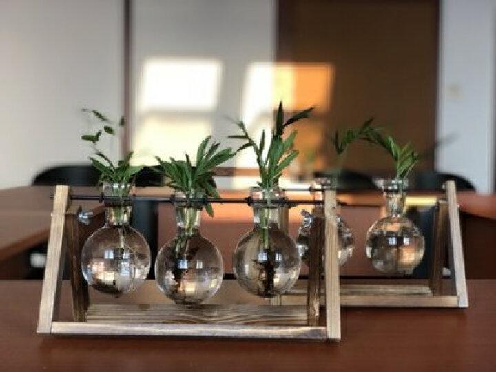 千韵(Qianyun) 客厅办公桌摆件透明小花瓶花架 绿植水培球木架S型铁艺玻璃球架 S形铁架吊瓶(含2个玻璃球) 晒单图
