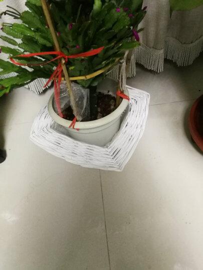 金柳 柳编花盆花架花瓶 藤编复古花器 田园花盆 花桶篮子盆栽 珍珠白色 5件整套 晒单图