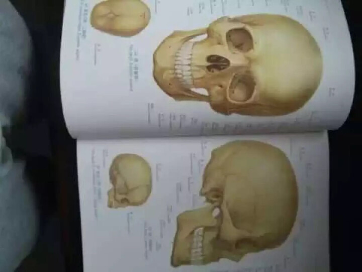 人体解剖彩色图谱(第2版)郭光文  晒单图
