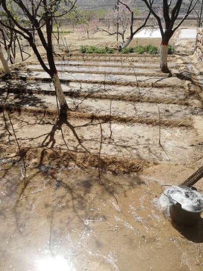 元井 精选懒汉瓜王西瓜种子 20公斤特大西瓜种子 超甜瓜种子阳台四季播种 晒单图