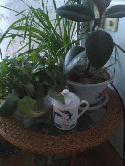 陶相惠 景德镇陶瓷茶杯带盖骨瓷水杯喝茶杯青花瓷器办公杯子500ml 开门迎福 晒单图