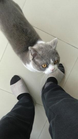 幼猫成猫天然猫粮猫奶糕蓝猫英短波斯猫宠物主粮* 猫奶糕400g共5包 晒单图