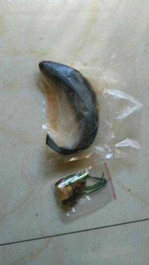 【2件包邮】美乡 野生淡水鱼 活鱼现杀活鲜生鲜 家常鱼类 野生黑鱼 乌鱼 500g(净膛)现杀 晒单图