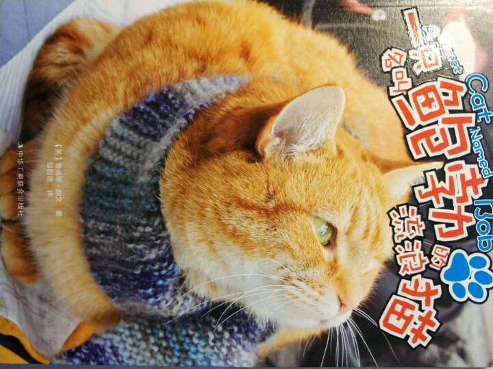 一只名叫鲍勃的流浪猫(升级版) 晒单图