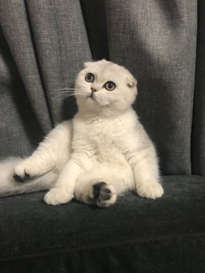 海洋之星三文鱼猫粮无谷全猫粮 全期猫粮6kg 晒单图