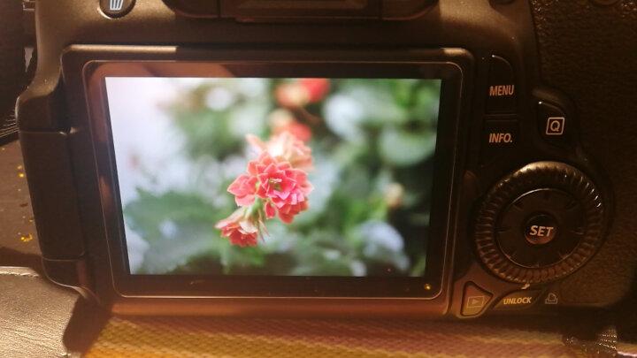 佳能(Canon)EF-S 60mm f/2.8 USM 微距镜头 单反镜头 晒单图