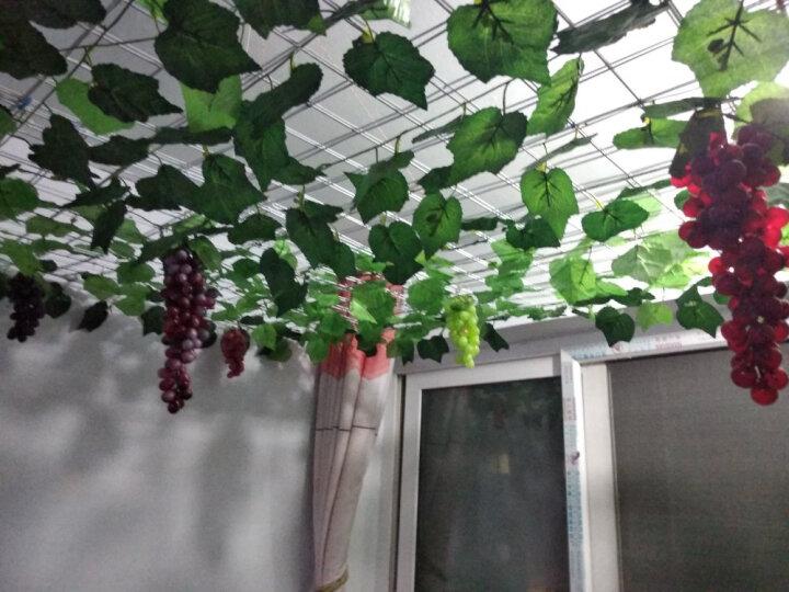 绿秀 仿真水果蔬菜 塑料假水果模型 藤条装饰紫葡萄绿葡萄塑料假葡萄 10款仿真水果 晒单图