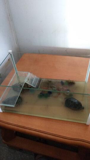 白领公社 乌龟缸玻璃带晒台 鳄龟缸巴西龟玻璃龟缸迷你鱼缸水族箱生态鱼缸小型鱼缸 鱼龟两用 套餐二 晒单图