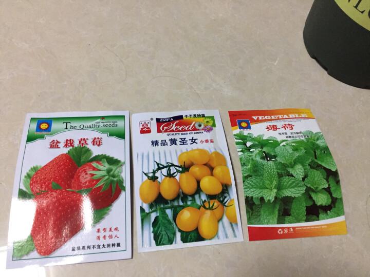 颜集卉 D蔬菜瓜果种子 家庭园艺庭院 黄圣女340粒 晒单图