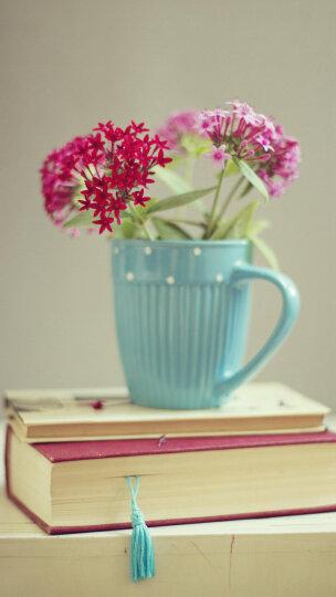 懒人园艺(LAZYGARDEN) 绿萝办公室居家观叶花卉绿植发财树水培植物栀子花带盆栽好 大绿萝-大号透明方盆 晒单图