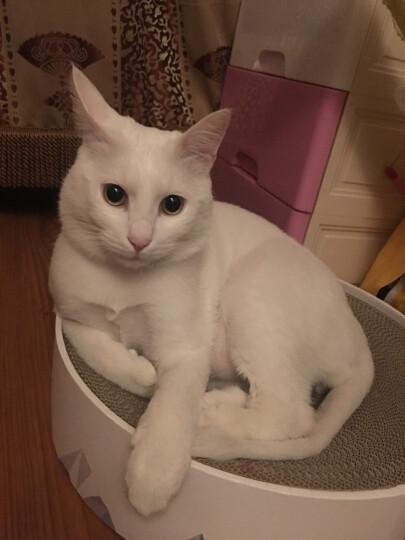 奥丁(ODIN) 牛肉味成猫猫粮1.5kg 晒单图