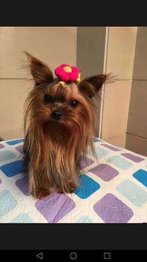KimPets 狗尿垫 狗尿片 宠物尿布狗狗尿片 狗厕所使用尿垫 XL一包(20片)粉蓝混发 晒单图
