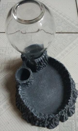 乌龟水盆食盆自动饮水器喝水盘角蛙蜥蜴蛇乌龟用品爬宠爬虫喂水器 中号 晒单图