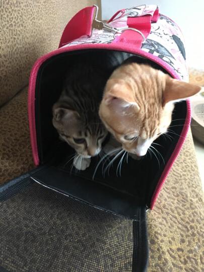 憨憨乐园 宠物包猫包狗背包泰迪外出用品可透气可折叠猫包狗包便携笼单肩袋子旅行包箱用品M号43*20*27CM 晒单图