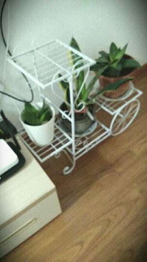 有嘉铁艺花架客厅阳台落地室内绿萝吊兰花盆架自行车多层花架子植物架 小号=白色 晒单图