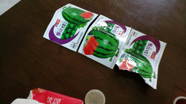 一播大地 红心西瓜籽 有新红宝8424等果肉鲜红 水果籽 庭院盆栽蔬菜种子 懒汉地L王 原装 晒单图