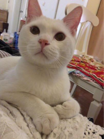 诗瑞 幼猫成猫猫粮 天然 室内幼猫粮1kg 晒单图