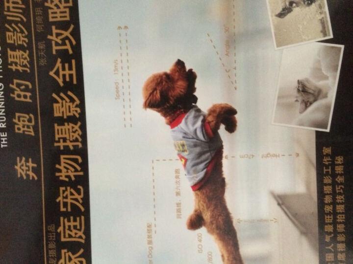 奔跑的摄影师:家庭宠物摄影全攻略 晒单图