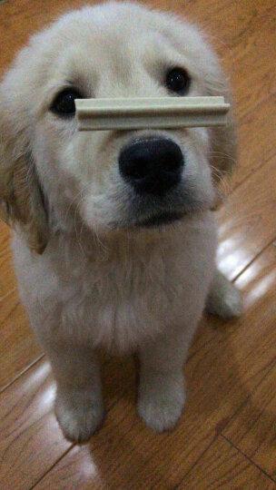 宝路 宠物零食狗零食 成犬大型犬洁齿棒磨牙棒狗咬胶125g单包装(新老包装交替发货) 晒单图